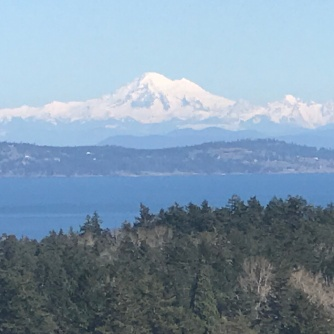 View of Olympic Mountains on a high point on our neighborhood walk !!